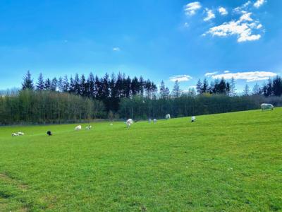 Beecraig Country Park